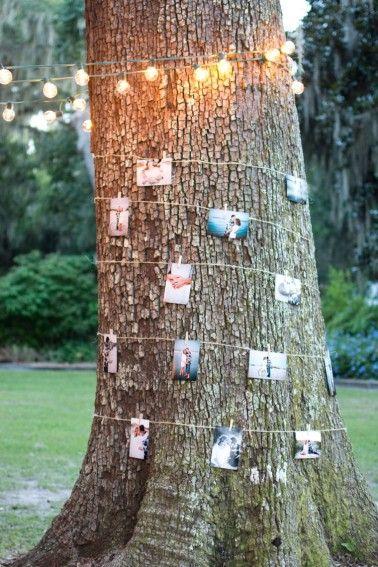 52f44e50e04f0adb00ac9c2b5177e4de--picture-tree-photo-tree